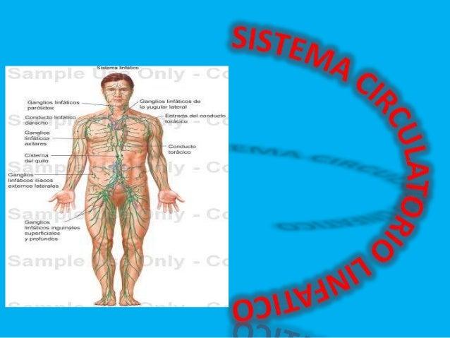 ANATOMIA Y FISIOLOGIA DEL SISTEMA LINFATICO -Es un sistema circulatorio que está formado por las siguientes estructuras: -...