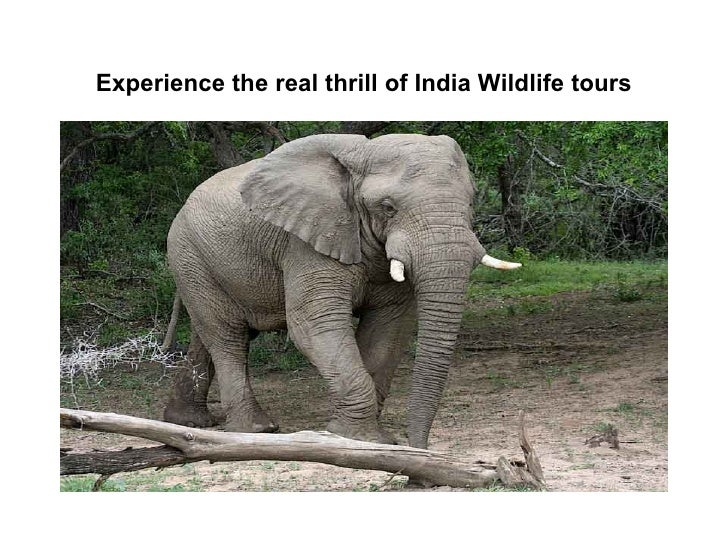 Experience the real thrill of india wildlife tours