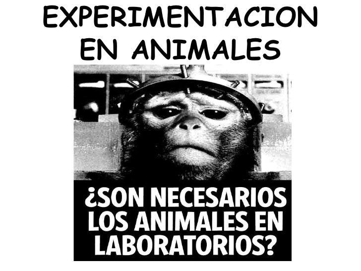 EXPERIMENTACION EN ANIMALES<br />
