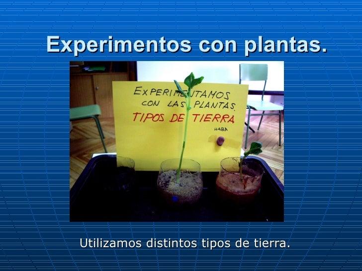 Experimentos con plantas. 1