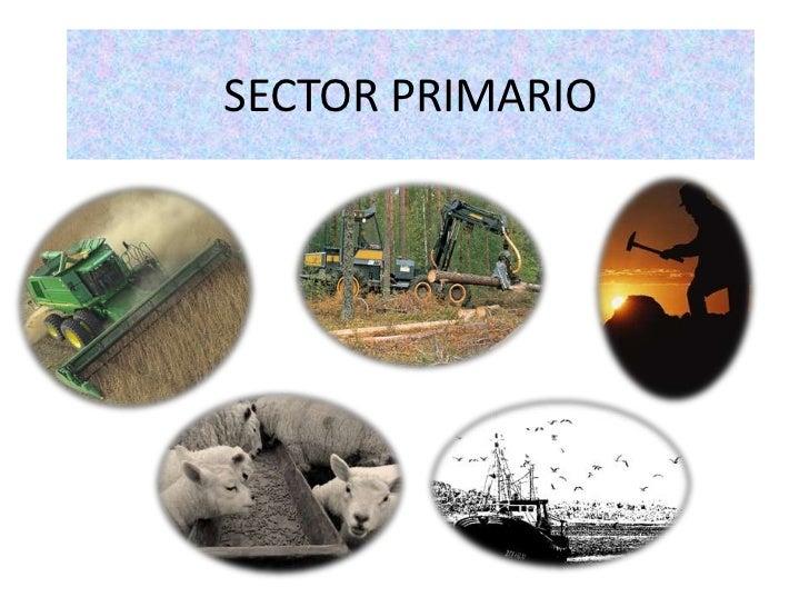 Explicación sector primario