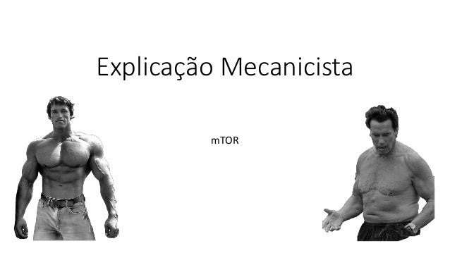 Explicação Mecanicista mTOR