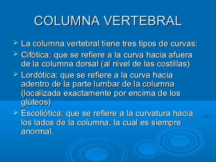 COLUMNA VERTEBRAL   La columna vertebral tiene tres tipos de curvas:   Cifótica: que se refiere a la curva hacia afuera ...