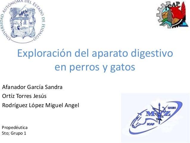 Exploración del aparato digestivo en perros y gatos Afanador García Sandra Ortíz Torres Jesús Rodríguez López Miguel Angel...