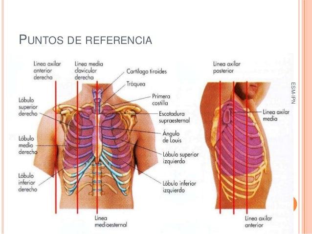 Semiología Quirúrgica : Introducción al Examen Físico del Tórax