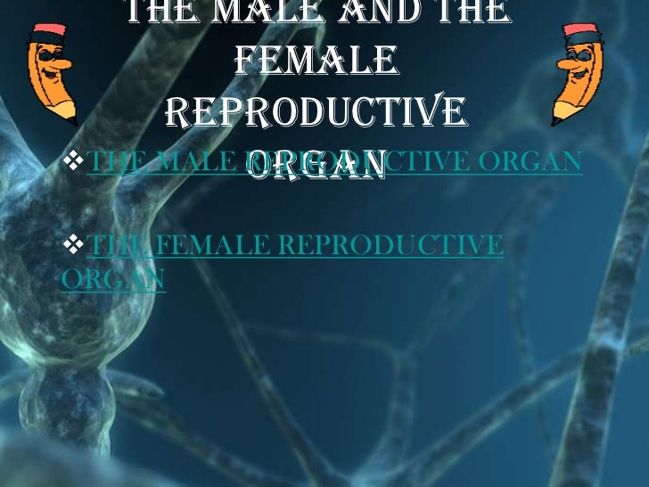 the male and the         female     reproductive          organTHE MALE REPRODUCTIVE ORGANTHE FEMALE REPRODUCTIVEORGAN