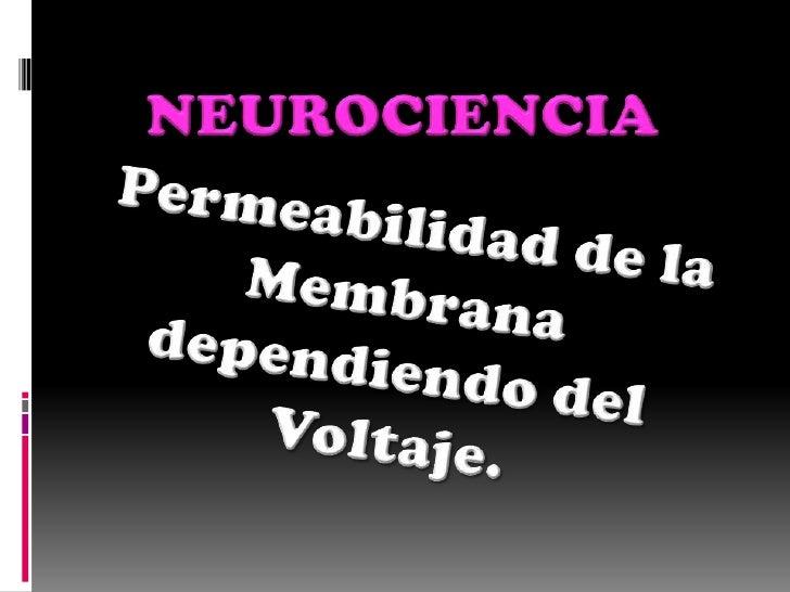 NEUROCIENCIA <br />Permeabilidad de la Membrana dependiendo del Voltaje. <br />