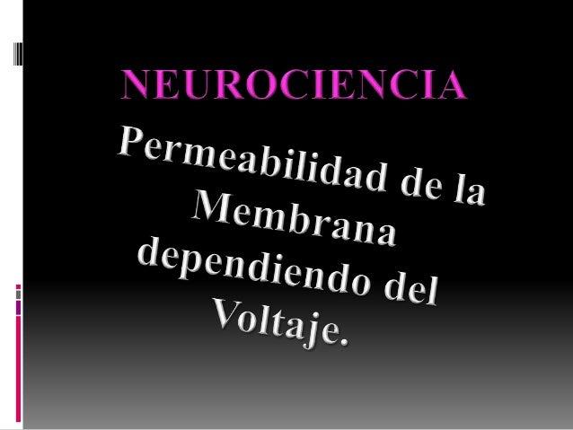Células N. → señales eléctricas → membrana ↑ permeabilidad Na → Potencial Acción Potencial de Membrana es más + que umbral