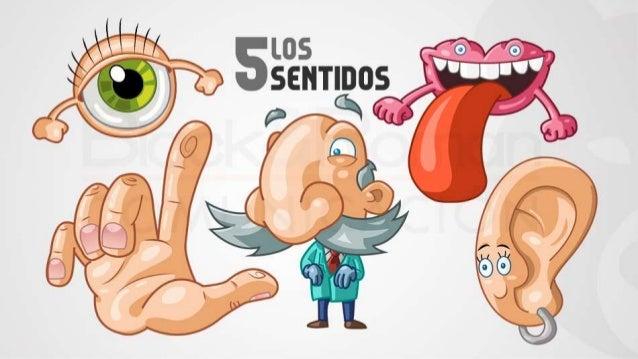 Organos de los sentidos anatom a ii for El divan de los sentidos