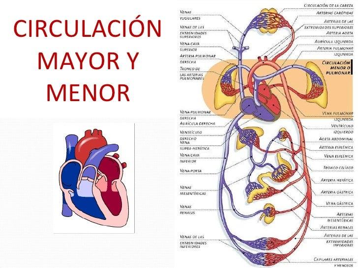 Circuito Pulmonar : Hipertension pulmonar