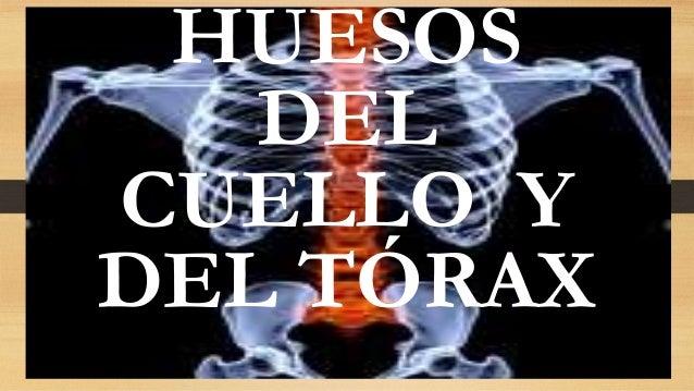 HUESOS DEL CUELLO Y DEL TÓRAX