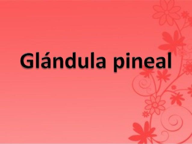 • Glándula endocrina • De 100-150mg de peso y 5-10mm de longitud • Se localiza entre los dos colículos superiores • Esta c...