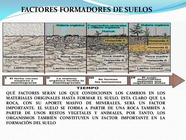 Exposicion de edafologia for Proceso de formacion del suelo