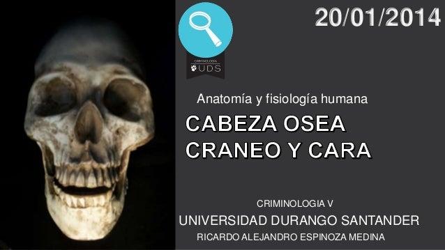 20/01/2014  Anatomía y fisiología humana  CRIMINOLOGIA V  UNIVERSIDAD DURANGO SANTANDER RICARDO ALEJANDRO ESPINOZA MEDINA