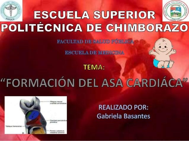 Articulación auriculoventricular Conducto auriculoventricular BULBO ARTERIAL Parte media: Cono arterial – infundíbulos de ...