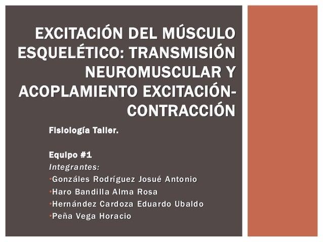 EXCITACIÓN DEL MÚSCULO  ESQUELÉTICO: TRANSMISIÓN  NEUROMUSCULAR Y  ACOPLAMIENTO EXCITACIÓN-CONTRACCIÓN  Fisiología Tal ler...