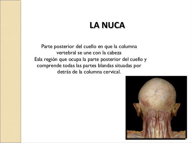 El masaje a la osteocondrosis del departamento de pecho de la vértebra