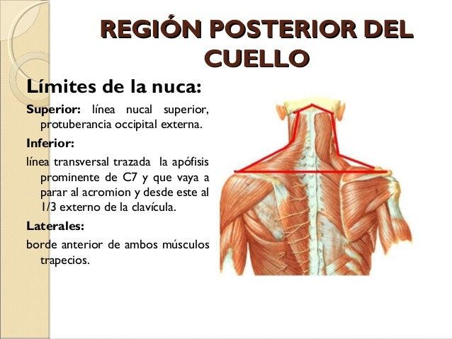 Page 3 for juego el cuerpo humano exterior e interior for Interior del cuerpo humano