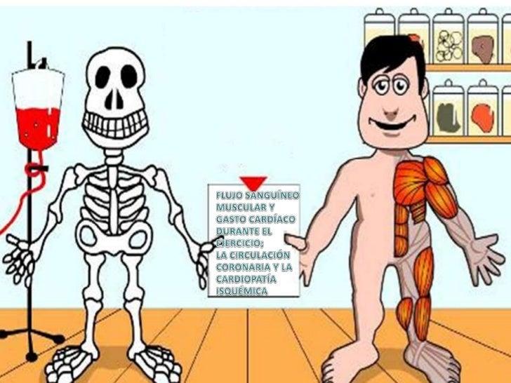 • Para cubrir la necesidad de flujo   sanguíneo de la masa corporal de   músculo esquelético, el gasto   cardíaco aumenta ...
