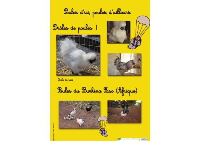 """Bibliothèque d'Autun_Exposition """"Poule rousse""""_Mars-Avril 2012"""
