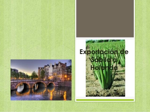 Exportación de sabila a holanda
