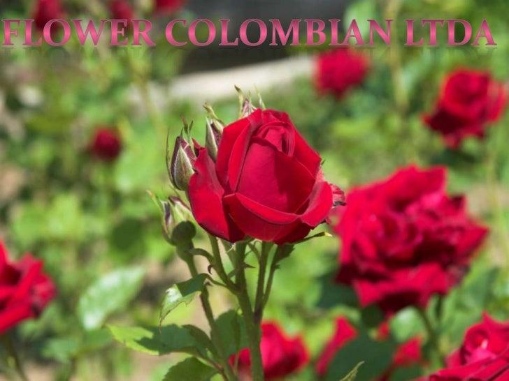 FLOWER COLOMBIAN LTDAEmpresa encargada en la producción especializada de flor de corte bajocubierta en invernáculo.Product...