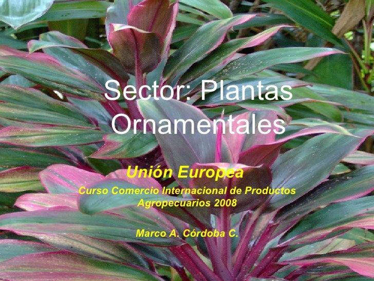 Produccion de plantas ornamentales upload share and for Produccion de plantas ornamentales pdf