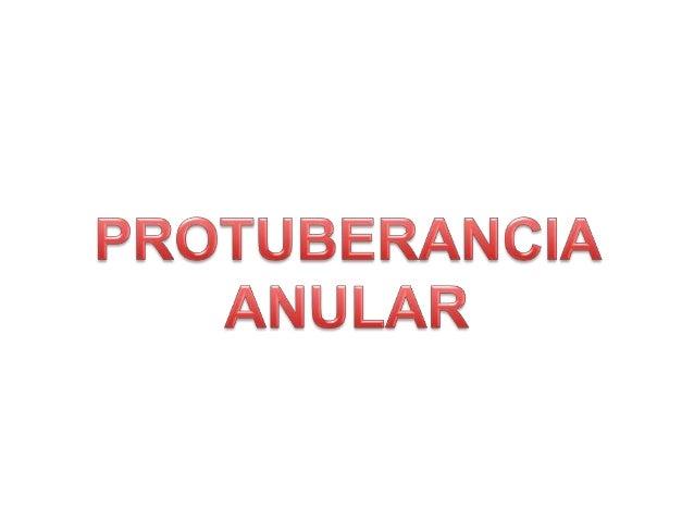 PEDÚNCULOS CEREBRALES
