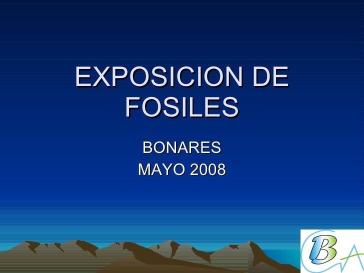 Exposicion De Fosiles