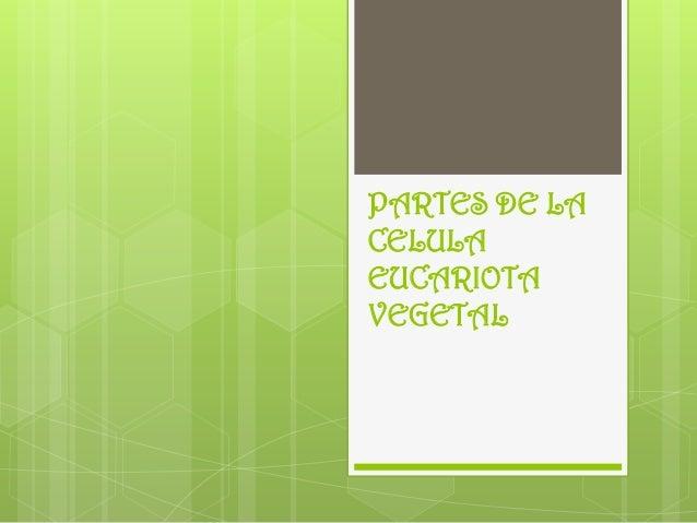 PARTES DE LA CELULA EUCARIOTA VEGETAL