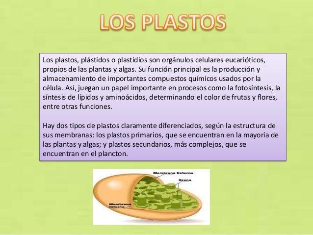 Los plastos, plástidos o plastidios son orgánulos celulares eucarióticos, propios de las plantas y algas. Su función princ...