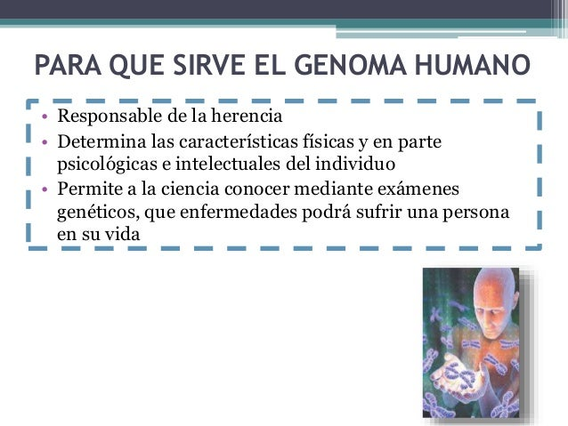 Genoma humano for En 2003 se completo la secuenciacion del humano