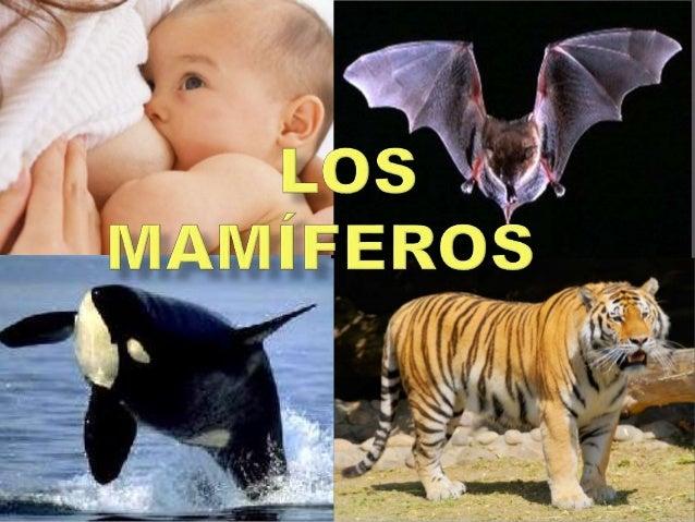  La temperatura corporal de los mamíferos es constante, es decir son animales de sangre caliente.  Respiran por pulmones.