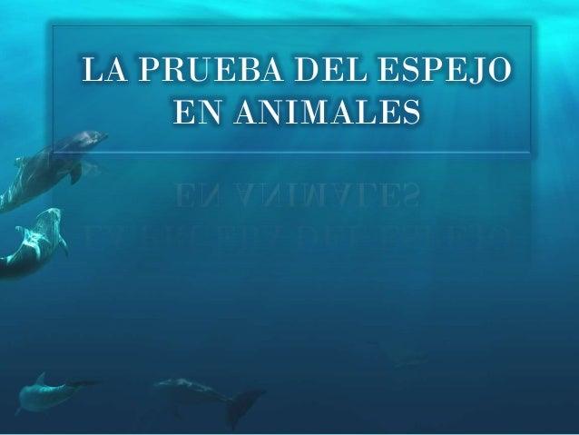 LA PRUEBA DEL ESPEJO EN ANIMALES