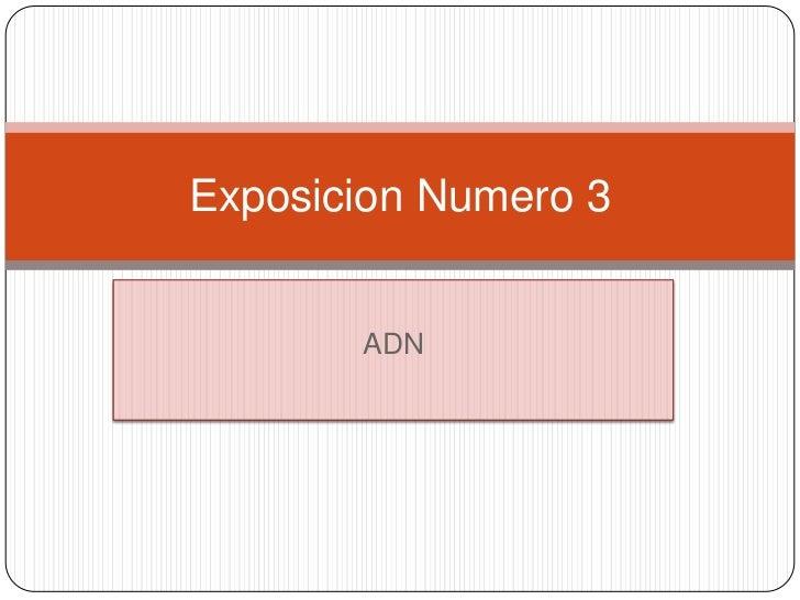 Exposicion Numero 3       ADN