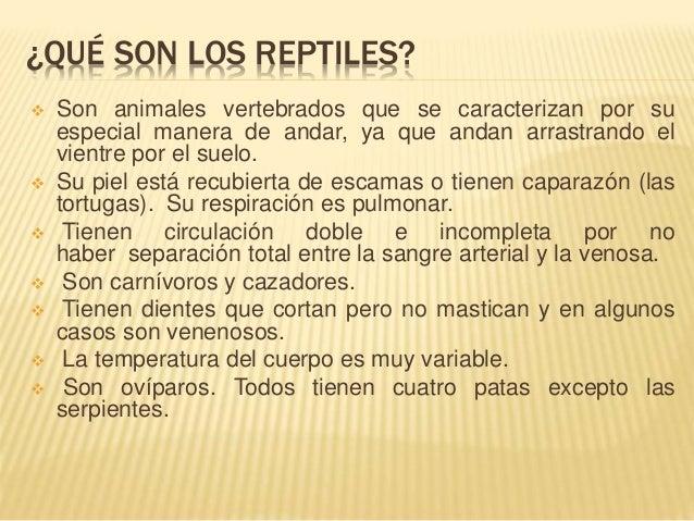 Q Son Los Reptiles Exposicion reptiles
