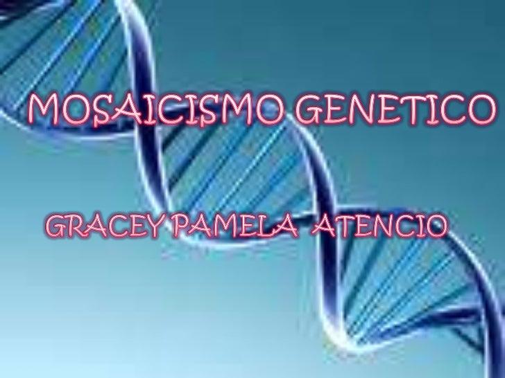 un mosaico genético o mosaicismo esuna alteración genética en la que, en unmismo individuo, coexisten dos o máspoblaciones...
