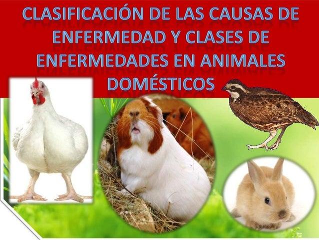 Enfermedades en animales domésticos (clases y causas)
