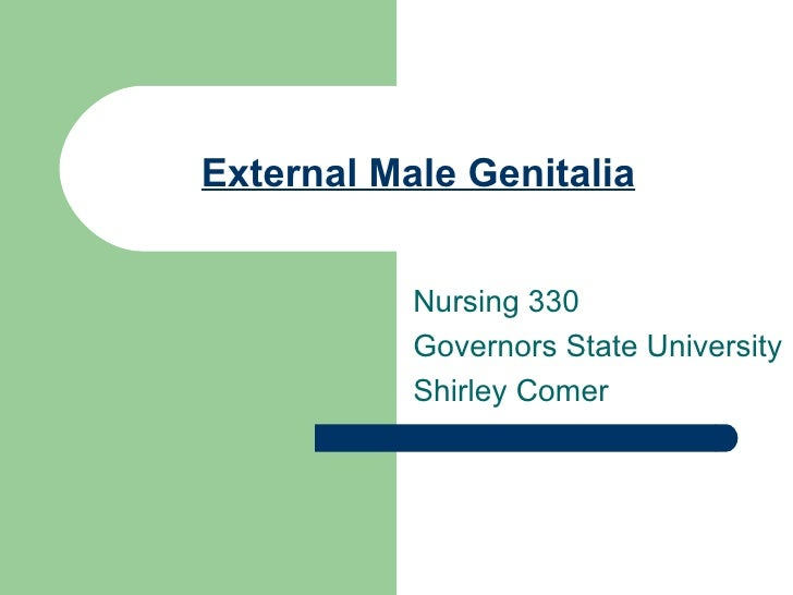 External Male Genitalia Nursing 330 Governors State University Shirley Comer