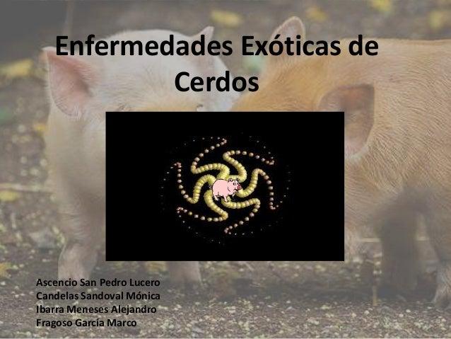 Enfermedades Exóticas de Cerdos  Ascencio San Pedro Lucero Candelas Sandoval Mónica Ibarra Meneses Alejandro Fragoso Garcí...