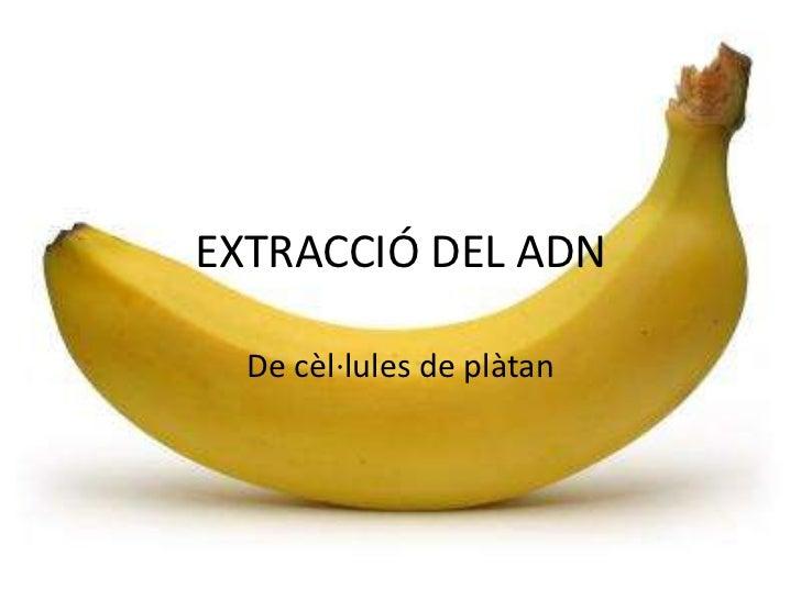 EXTRACCIÓ DEL ADN  De cèl·lules de plàtan
