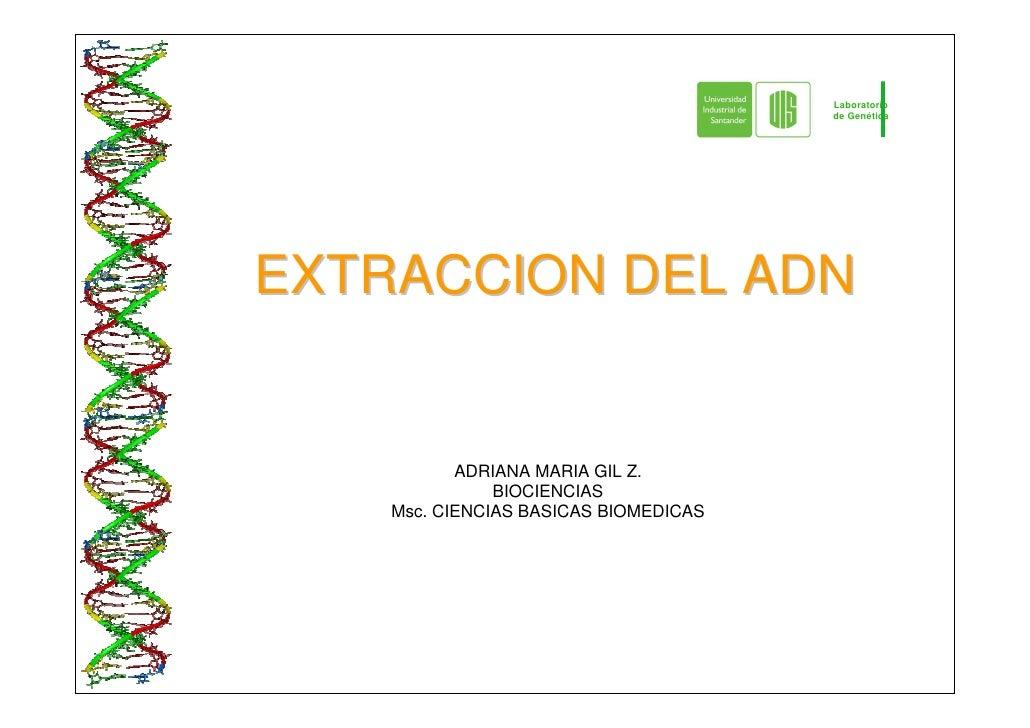 Laboratorio                                        de Genética     EXTRACCION DEL ADN              ADRIANA MARIA GIL Z.   ...