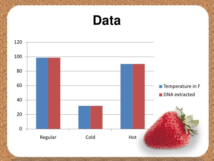strawberry lab essay Strawberry dna extraction lab report essay papers online report a problem comparing dna sequences paul andersen shows you how to compare dna sequences to understand evolutionary relationships.