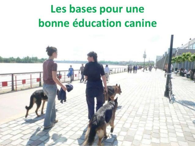 Les bases pour unebonne éducation canine