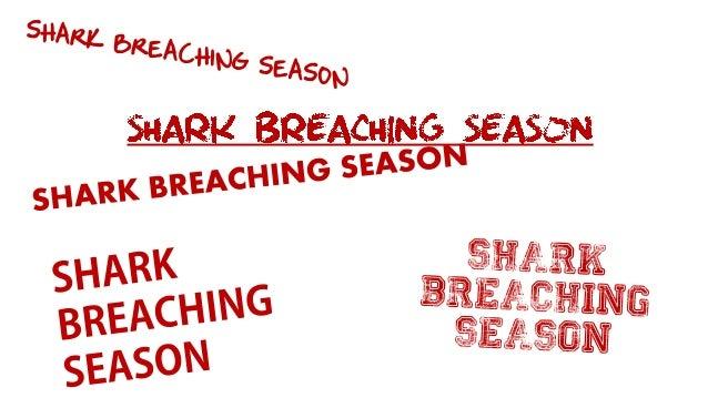 Shark breaching in Cape Town