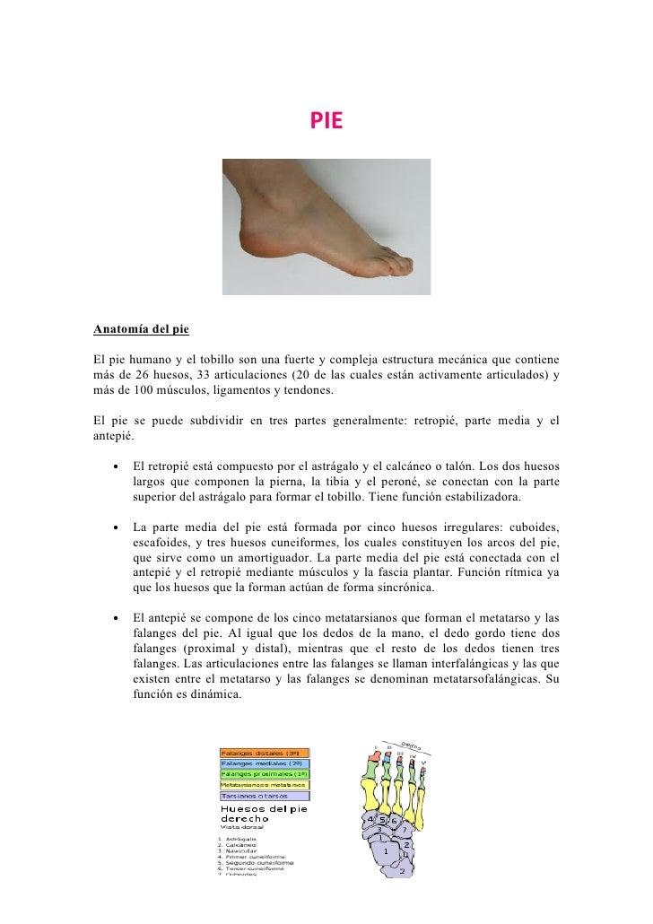 PIEAnatomía del pieEl pie humano y el tobillo son una fuerte y compleja estructura mecánica que contienemás de 26 huesos, ...