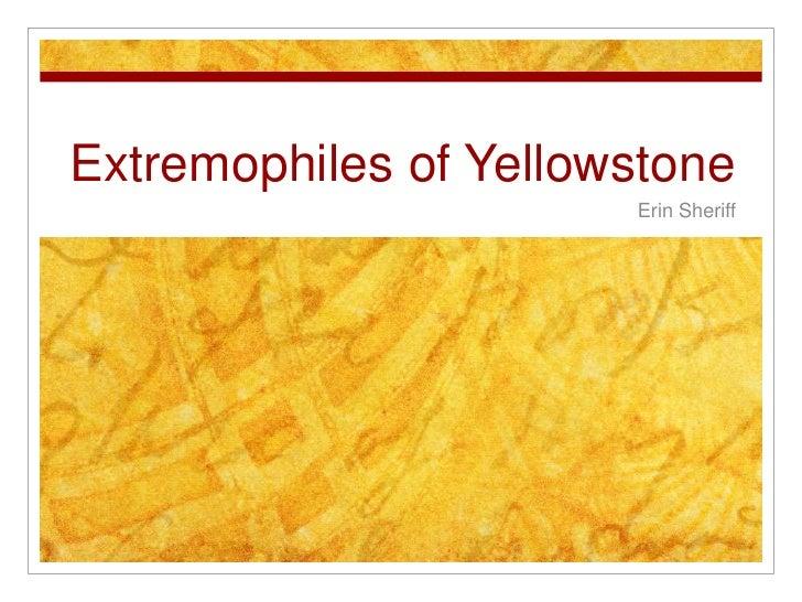 Extremophiles of Yellowstone                        Erin Sheriff
