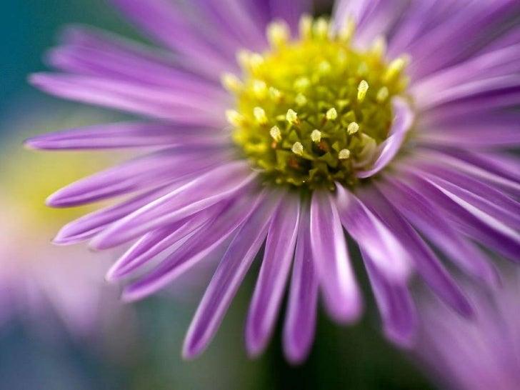 Eye-catching Dahlia flowers