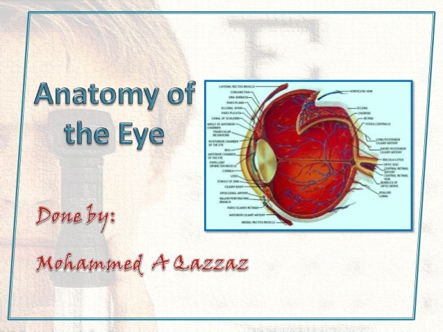 • The outer coat which is transparent anteriorly is called the cornea. • The white and opaque coat is the sclera.