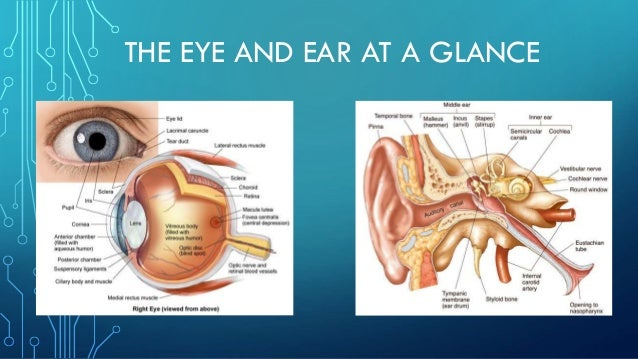 THE EYE AND EAR AT A GLANCE